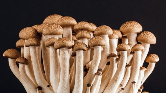 fun facts about mushrooms