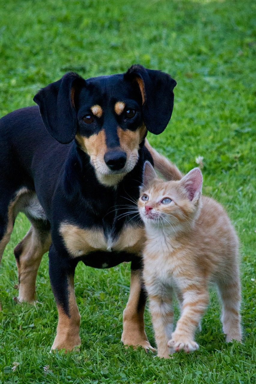 what to include in a pet plan