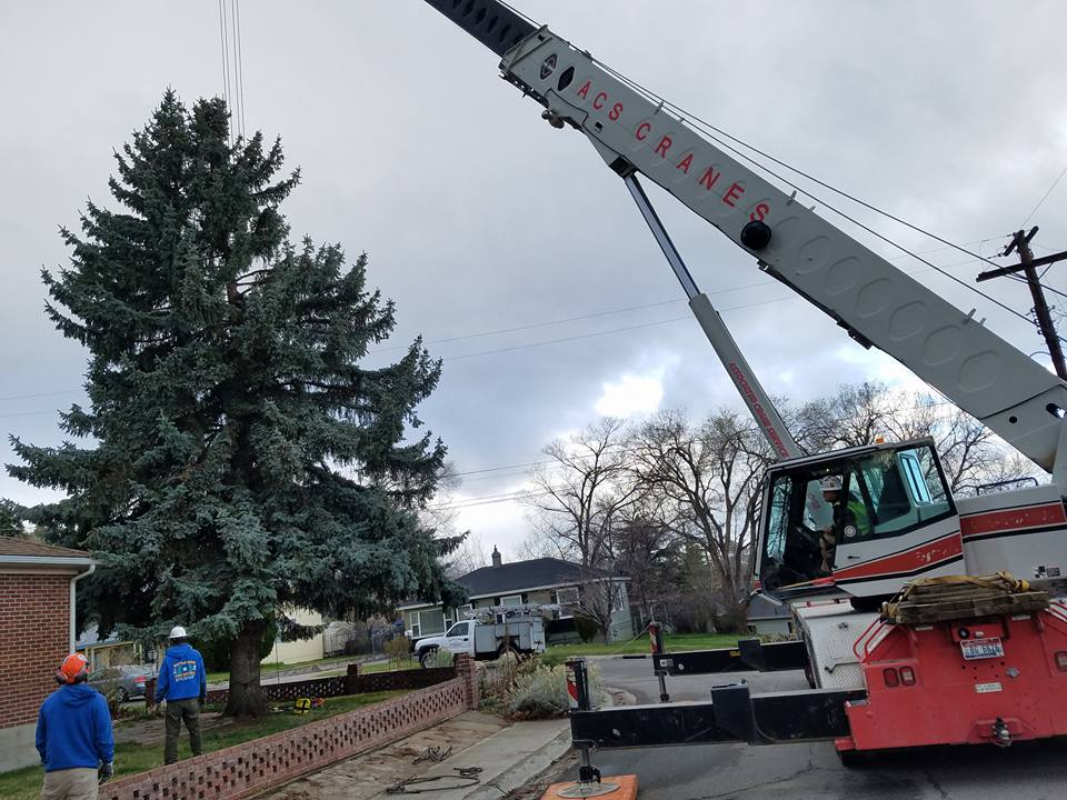 Crane Assisted Tree Removal