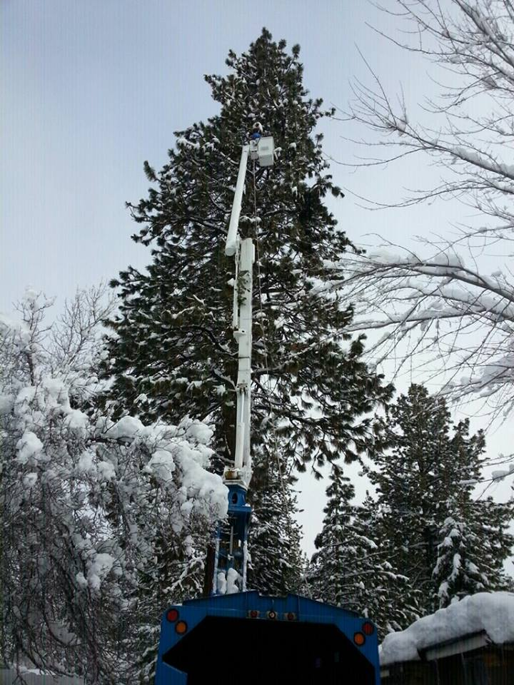 Crane Assisted Tree Removals