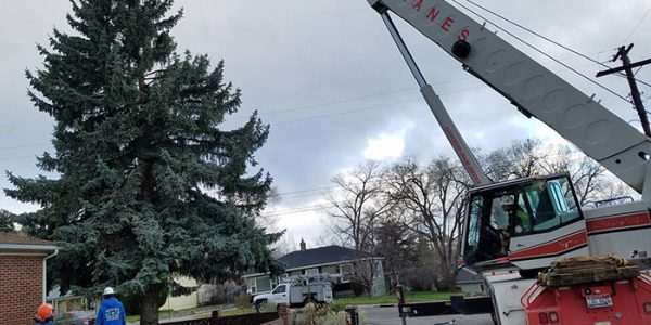 Crane Assisted Removals, northern nevada tree care service, northern nevada tree experts