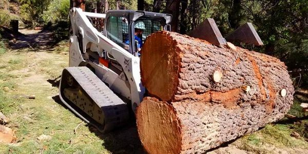 Large Tree Removal Services, northern nevada tree care service, northern nevada tree experts