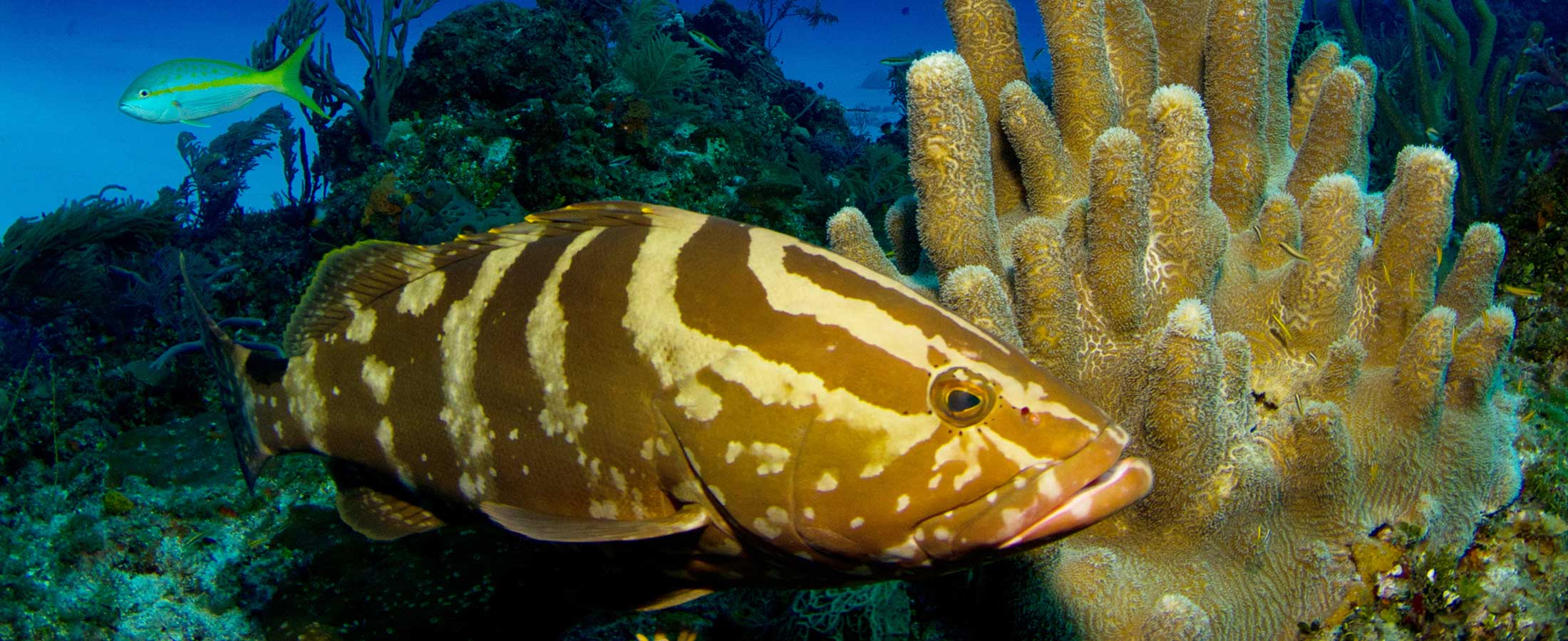 grouper gulley dive site