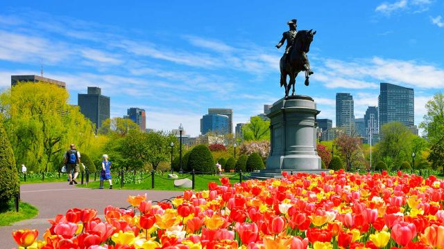 Boston public garden filled with yellow, orange, and red tulips with a statue of George Washington riding a horse and the city in the background, boston performance tours