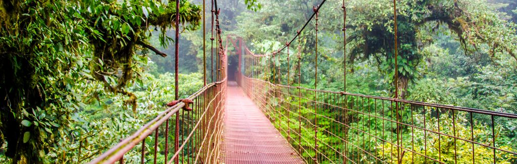 Canopy walkway in Costa Rican forest, costa rica performance tours