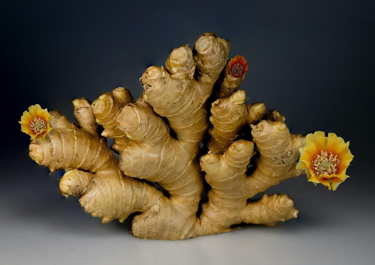 ginger wholesale